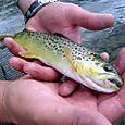 4651_fish