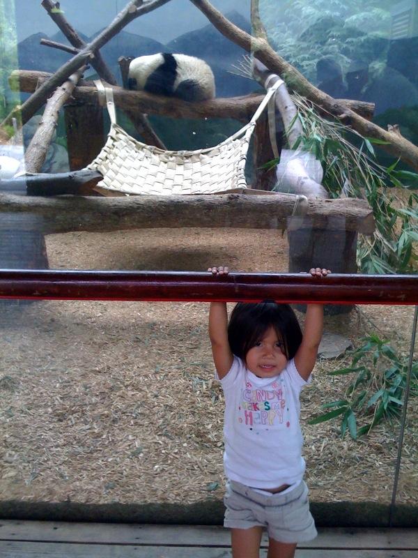 Hanging with the pandas at the Atlanta zoo